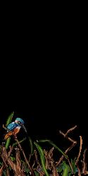 Kingfisher Lure