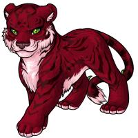 cherry tigrean